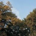 СП Стабла храста лужњака на Палићу